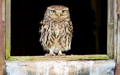 Little Owl Hide Open For Bookings