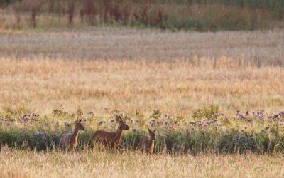 Wildlife on Eastbrook Farm