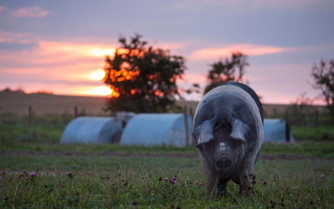 Summertime on the Farm